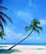 海南:将设立区块链产业基金 举办世界区块链大会